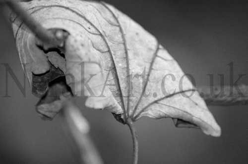 black and white nature photography. Leaves In Black amp; White